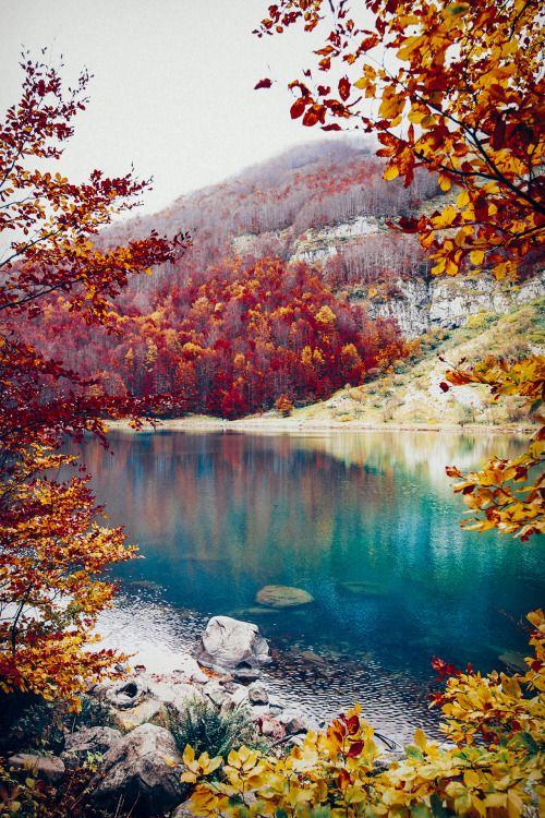 elenamorelli:  { neverending autumn }
