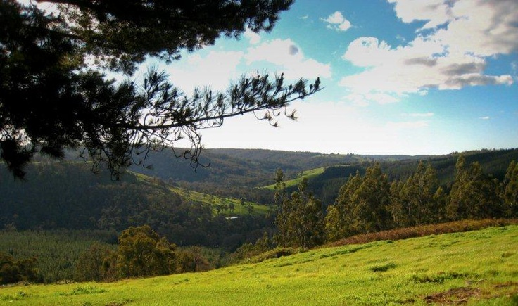 View from Blackwood Campsite