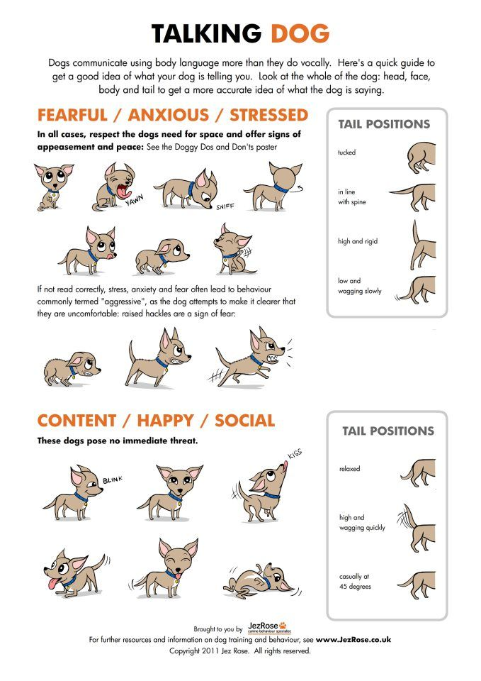 Learn about how your dog Communicates with you with this Talking Dog Chart from Jez Rose