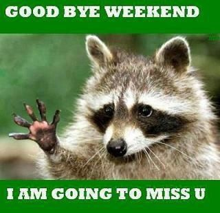 Goodbye weekend quotes cute weekend days of the week sunday weekend quotes sunday quotes racoons