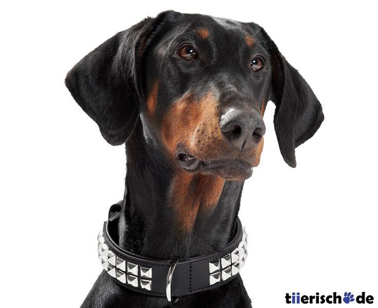 Hunter Hundehalsband aus Leder Rocky 2, Bild 2