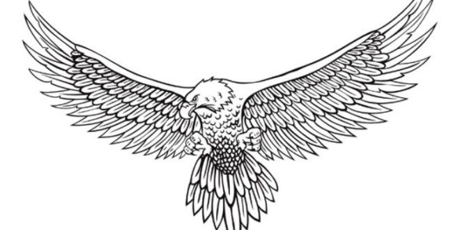 Aneka Gambar Sketsa Burung Nan Cantik | WarnaGambar.com