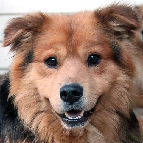 Big Fluffy Dog Rescue - finds foster and homes for those who would not otherwise make it. http://www.bigfluffydogs.com