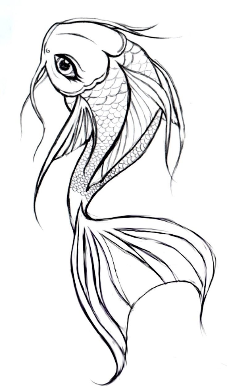 This is a photo of Nerdy Easy Koi Fish Drawing