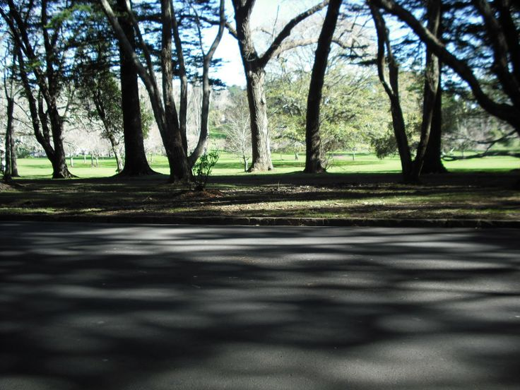 Location: Cornwall Park, Auckland