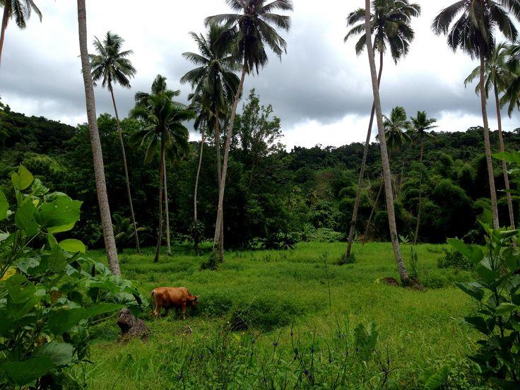 Savusavu – Fiji | thecruisewife
