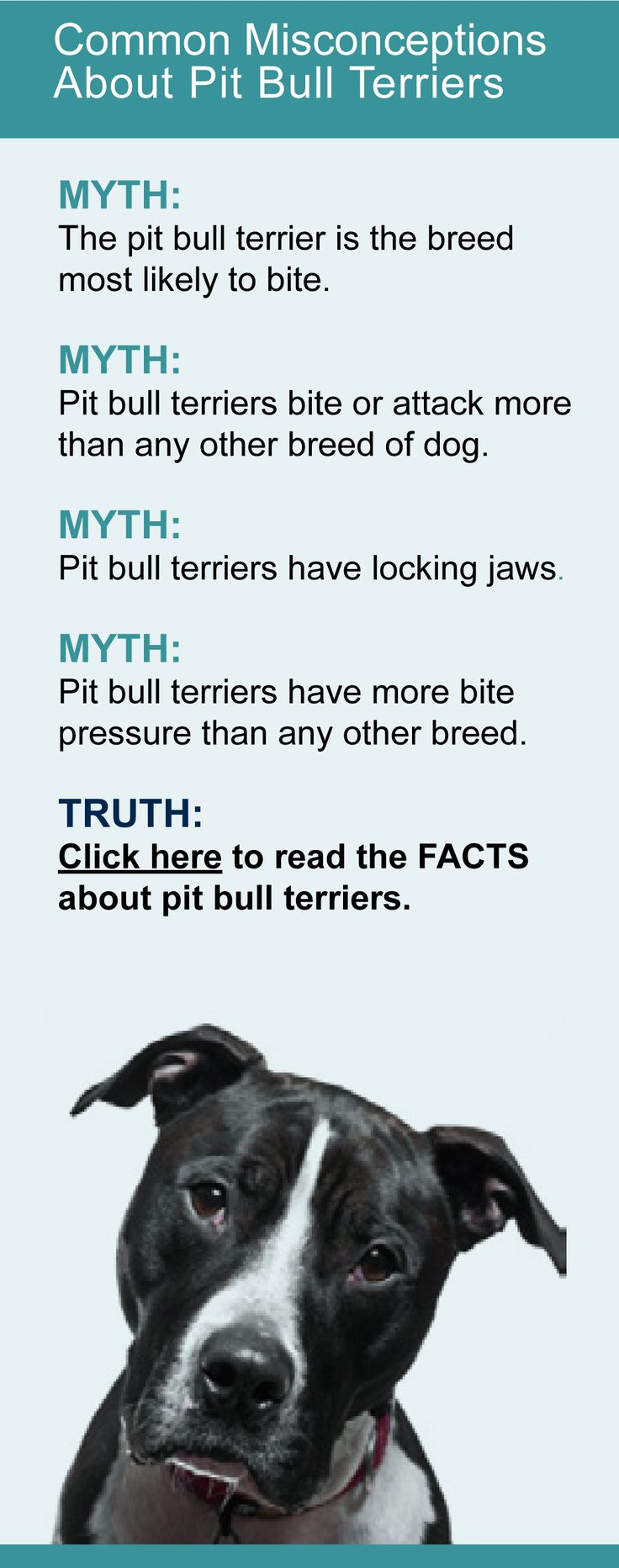 pit bull misconceptions and facts While there are a lot of misconceptions about pit bulls, there are also some great true facts these facts show the greatness of the breed and show how loving this breed is to have.