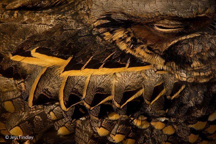 2014 倫敦自然歷史博物館野生攝影獎