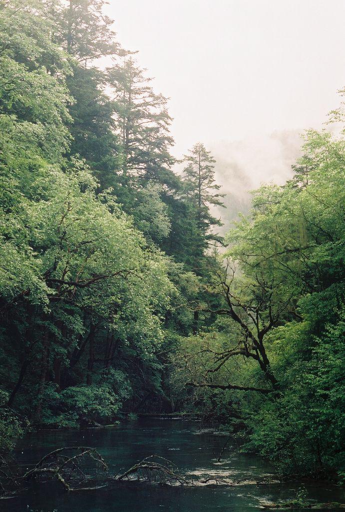 A shoot in the forests of Jiu Zhai Gou | China (by Koe Inlow)