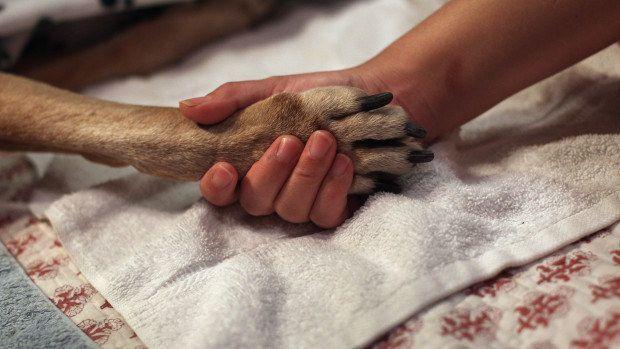 Si hace mucho calor o mucho frío, frotar vaselina en las patas de su perro antes de salir afuera. | 25 Trucos que te harán la vida más fácil si tienes un perro