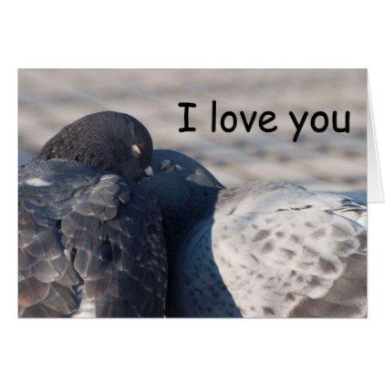 Kissing Pigeons Card - valentines day gifts love couple diy personalize for her for him girlfriend boyfriend