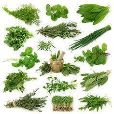 El Huerto en Macetas: 14 plantas aromáticas y sus propiedades