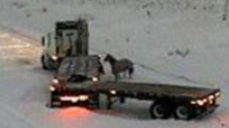 A Winnipeg truck driver named Peter Douglas was recently stranded on a highway in freezing...Read More »