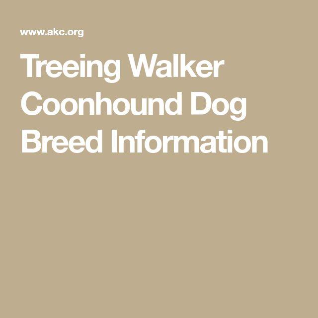 Treeing Walker Coonhound Dog Breed Information
