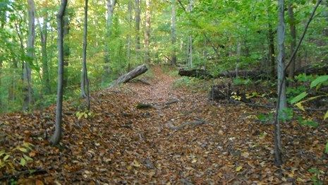 Rock Creek Park - A wide bridle trail goes through the woods