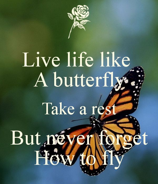 Live life like  A butterfly Take a rest But never forget How to fly