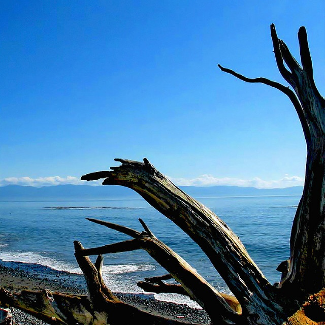 Driftwood on French Beach near Sooke. #YouWontBeSorry #Sooke