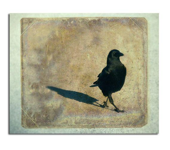 Corvidae Crow Image Nature Art Image Bird Photograph by gothicrow