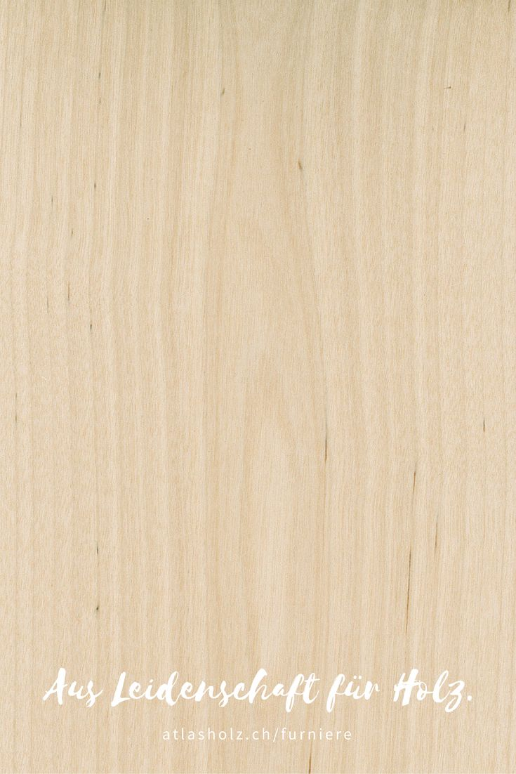 Furniere Birke | Veneers Birch  | Botanischer Name/Botanical Name: Betulla spp.
