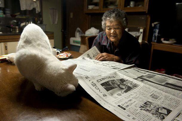"""12 lat temu fotografka Miyoko Ihara zaczęła fotografować swoją babcię, Misao. Kobieta była starszą osobą, więc w razie jej odejścia, wnuczka chciała mieć pamiątkę w postaci zdjęć ukochanej babci. Zdjęcia nie byłyby tak poruszające, gdyby nie kot, którego babcia znalazła pewnego dnia. Dała mu na imię """"Fukumaru"""" i bardzo się"""