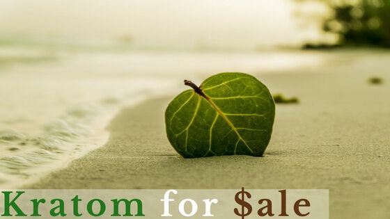 Find cheap but high quality kratom.