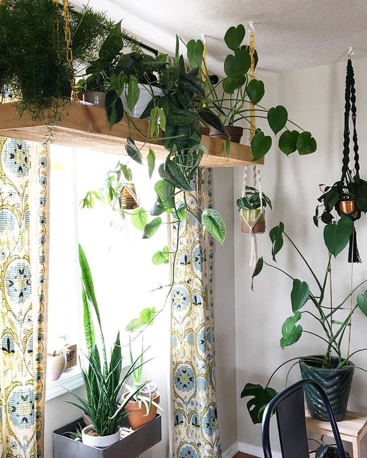 The plants I put on this hanging shelf are doing r…