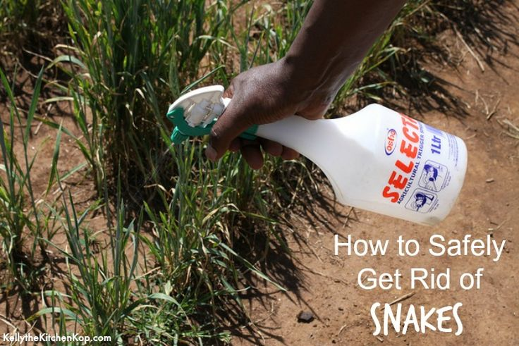 Natural Snake Repellent (Any other snake freaks out there? You will not believe this story!)