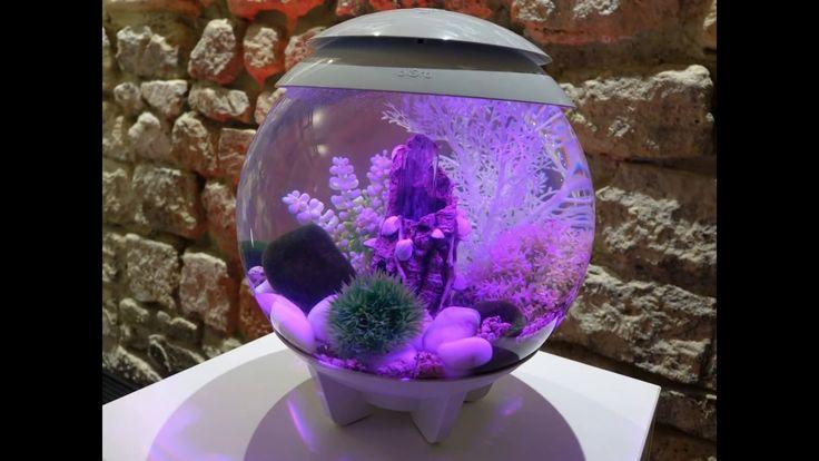 BIORB BY OASE LIVING WATER : Jardins aquatiques biOrb et aquariums d'int...Ainsi, que vous soyez un amateur éclairé ou bien un simple néophyte dans le domaine de l'aquariophilie, vous serez sans aucun doute séduits, comme nous l'avons été, par les multiples possibilités de réalisations de jardins aquatiques -avec ou sans poisson- qui s'offrent à vous avec les modèles biOrb LIFE, biOrb FLOW, biOrb TUBE, biOrb CLASSIC, biOrb HALO !