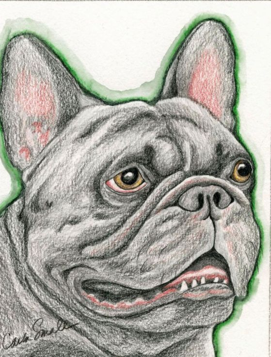 Buy French Bulldog Pet Dog Art Original Drawing 4 x 5 -Carla Smale, Pencil drawing by carla smale on Artfinder. Discover thousands of other original paintings, prints, sculptures and photography from independent artists.