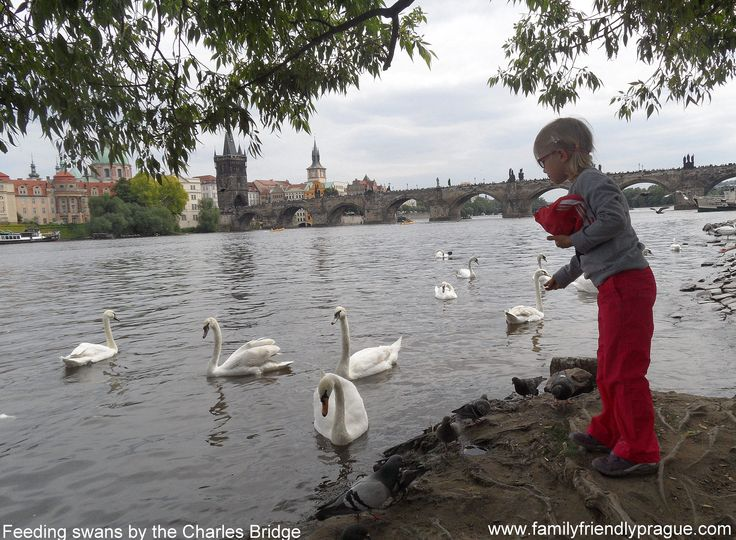 Looking for free things to do?Believe it or not, there's plenty of free stuff to do in Prague with the kids—here's our guide to the best landmarks, events and activities that are free. Happy exploring! #prague#child#family#czech#fun#child-friendly#holiday#free