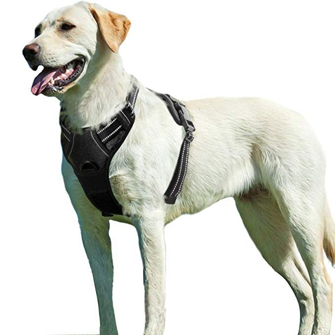 Amazon Com Eagloo No Pull Dog Harness With Front Clip Walking
