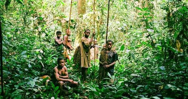 La responsabilité de WWF et de WCS, deux grandes ONG qui gèrent les aires protégées dans la région, est mise cause dans un rapport de Survival International.