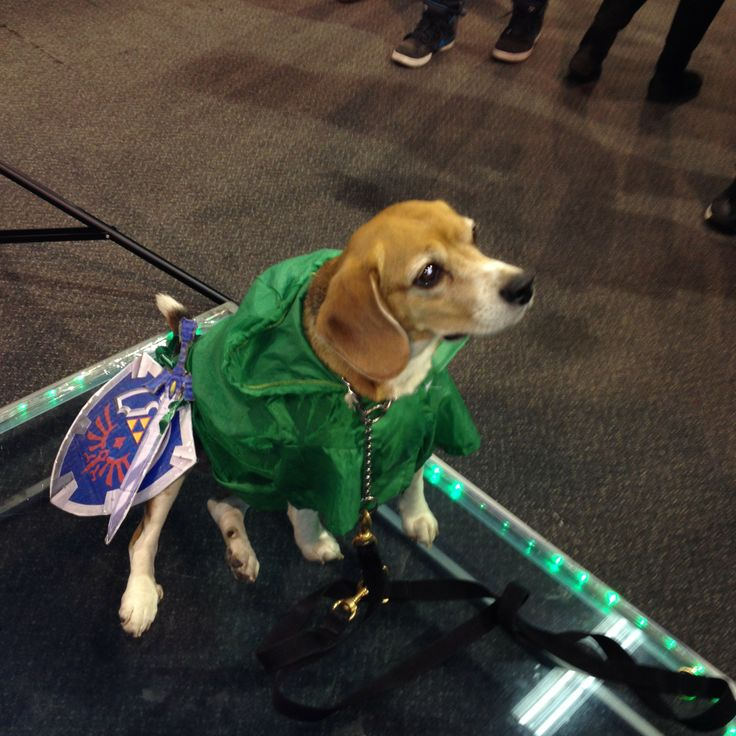 Image result for dogs dressed like zelda