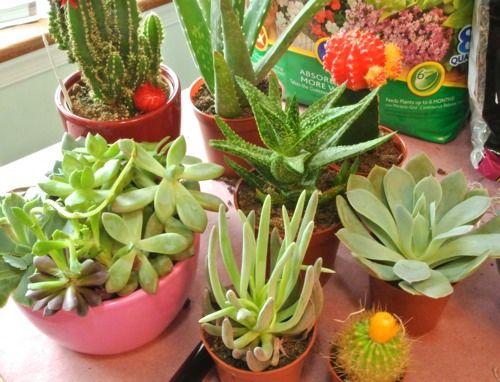Succulent Garden Ideas: Miniature Succulent Garden in a Mason Jar. #DIHWorkshop