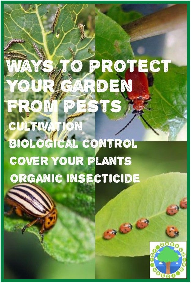 Safe And Effective Ways Of Natural Pest Control In 2020 Natural Pest Control Organic Plants Pests