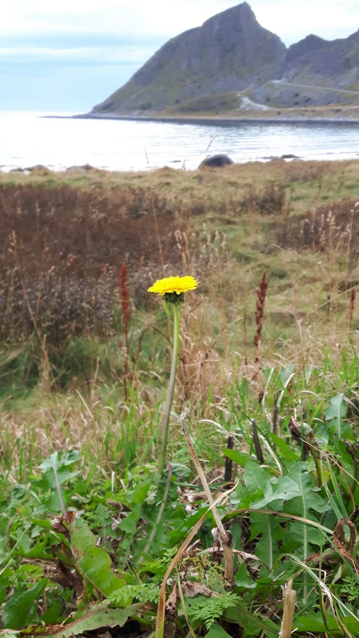 Last dandelion this year🍂