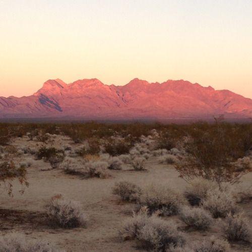 Mojave Desert Native Plants: The 25+ Best Mojave Desert Ideas On Pinterest
