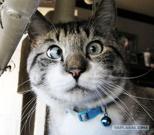 Cutest cross-eyed cat ever!  #cat #catsCrosseyed Cat, Crosses Ey Kitty, Eye Cat, Crosseyed Kittens, Crosses Ey Cat, Adorable Crosseyed, Crosses Eye, Crosseyed Kitty, Animais Pra