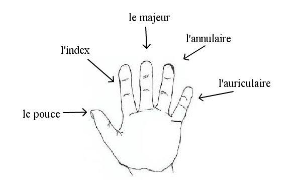 Palce dłoni (Les doigts de la main