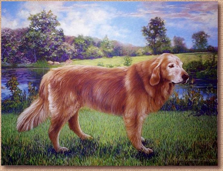 """Pet Portrait of """"Cassie"""", An elderly Golden Retriever"""