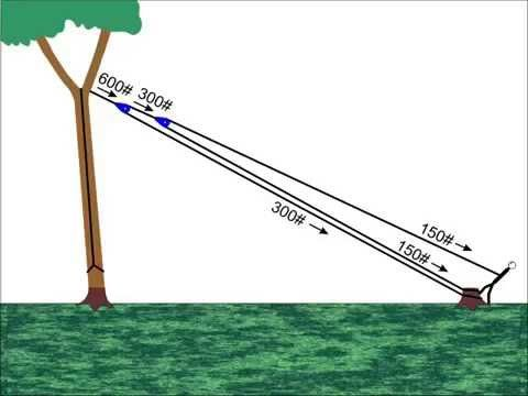 Solar Panel Cost >> Pulling Trees Down With Rope - YouTube   Tree lopping, Tree pruning, Tree felling