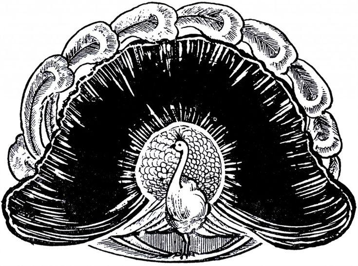 Wonderful Peacock Image - The Graphics Fairy