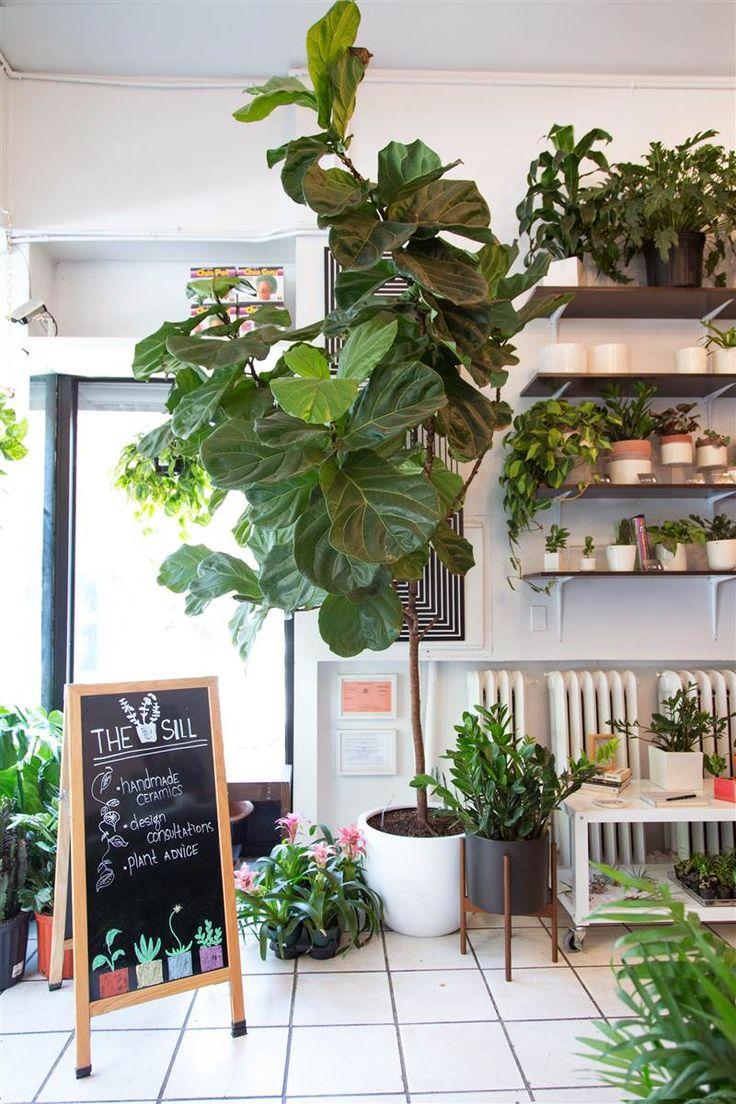 Fiddle Leaf Fig tree - list of easiest house plants!