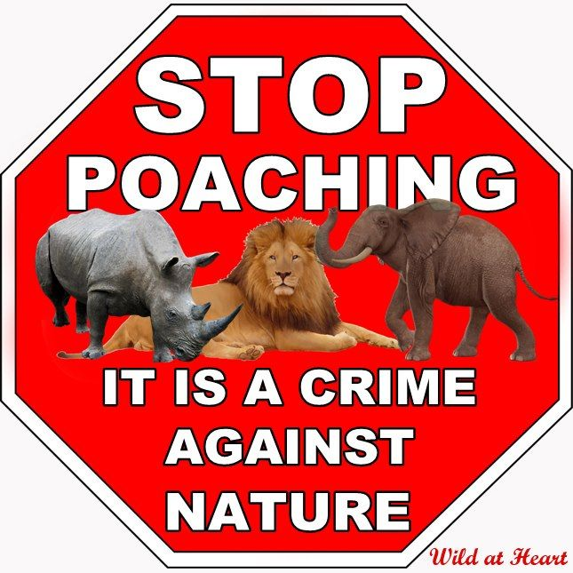 STOP POACHING | Wildlife banners | Pinterest