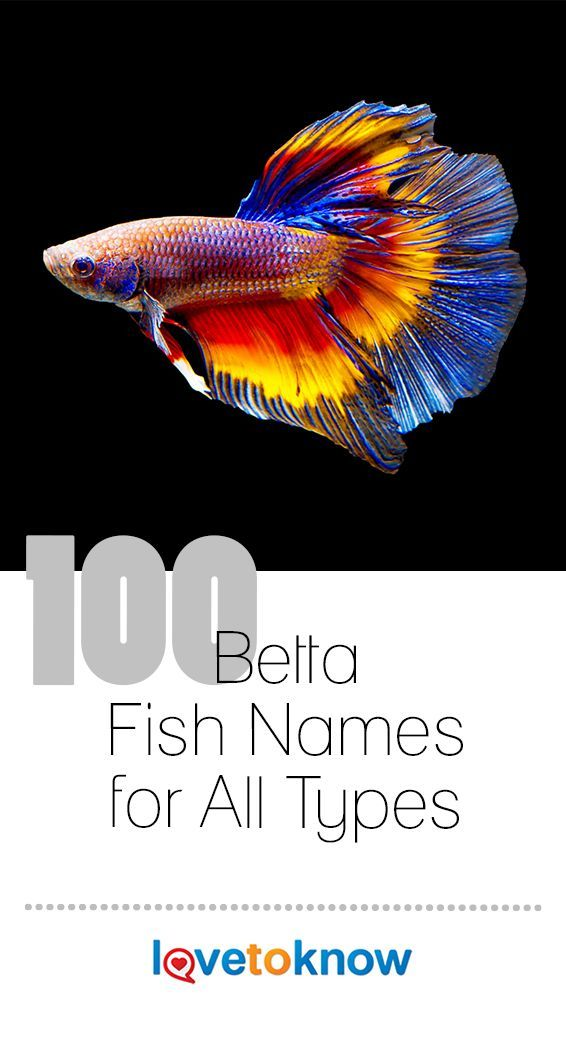 100 Betta Fish Names For All Types Lovetoknow Betta Fish Betta Beta Fish Names
