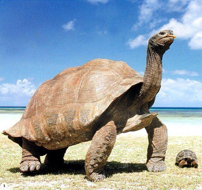 Giant Tortoises !
