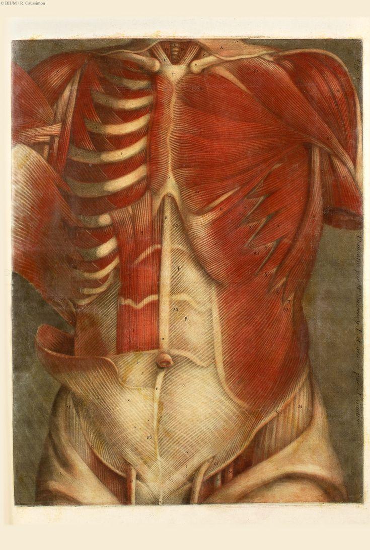 Les 17 meilleures id es de la cat gorie poitrine peinte for Anatomie du meuble