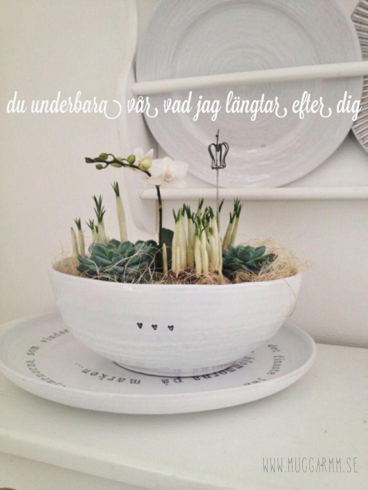 Big bowl  for plants etc
