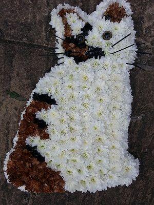 Cat Tribute