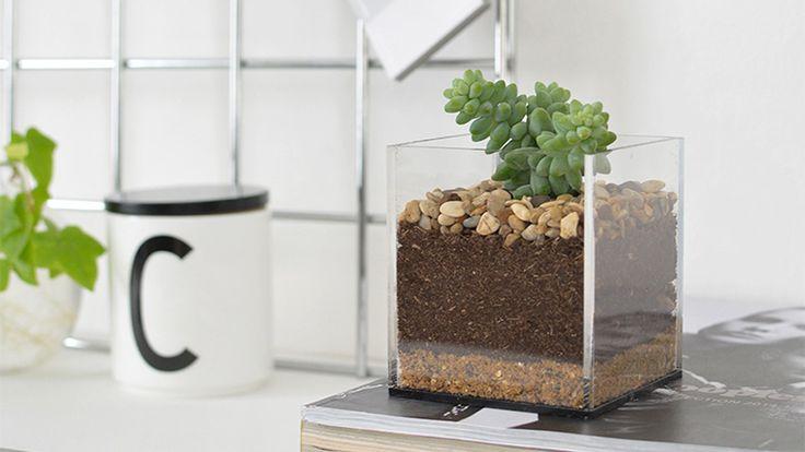 Vous souhaitez créer un terrarium DIY ? Découvrez les 8 tutos que j'ai sélectionné pour vous et qui vous permettront d'y parvenir !